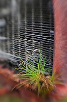 Grass Sprouts And Old Car Radiator - Pottsville - Merlin, Oregon - Lensbaby
