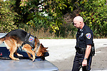 A german shepherd K-9 dog sniffing for drugs on a vehicle while doing a search with a police department officer