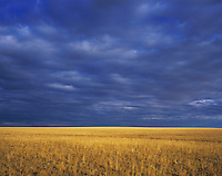 Prairie after Rain storm, Texas Panhandle, Texas, USA