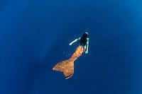 Mermaid swimming in the deep blue ocean<br /> St. John<br /> US Virgin Islands