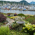 garden scene with Gibsons harbour as backdrop
