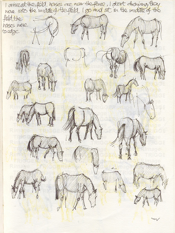 Sketchbook drawing of horses