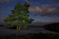 &quot;White Pine on Kwanipi Lake&quot;<br />