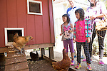 Rebecca and Sabrina Han of Los Altos Hills, from left to right, and their parents gaze at chickens at the Kasso Coop in Los Altos.