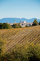 View of the historic village of Orvieto and the Duomo, from Palazzone Vineyards, Umbria, Italy
