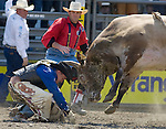 John Jacobs, from Timber Lake, S.D. gets head butted by Cowboy Caviar during the Xtreme Bull Riding Competition at the Kitsap County Fair and Stampede  held Aug. 26 to Aug. 30, 2009 in Silverdale, WA. All Right Reserved. © 2009A. Jim Bryant Photo. All Right Reserved. © 2009