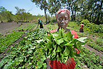 Leticia Angelo shows spinach she has harvested at a church-supported community garden at Napkasiki, South Sudan. The project is a joint project of the Roman Catholic diocese of Tombura-Yambio and Caritas Austria, and helps families displaced by attacks from the Lord's Resistance Army to get restarted on land they once fled. They grow vegetables both for their own consumption as well as to sell in nearby markets for cash, which they use to pay for medicines and school fees.