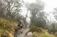 Woman tramper walking in fog through alpine section of Routeburn Track, Fiordland National Park, Southland, South Island, World Heritage Area, New Zealand