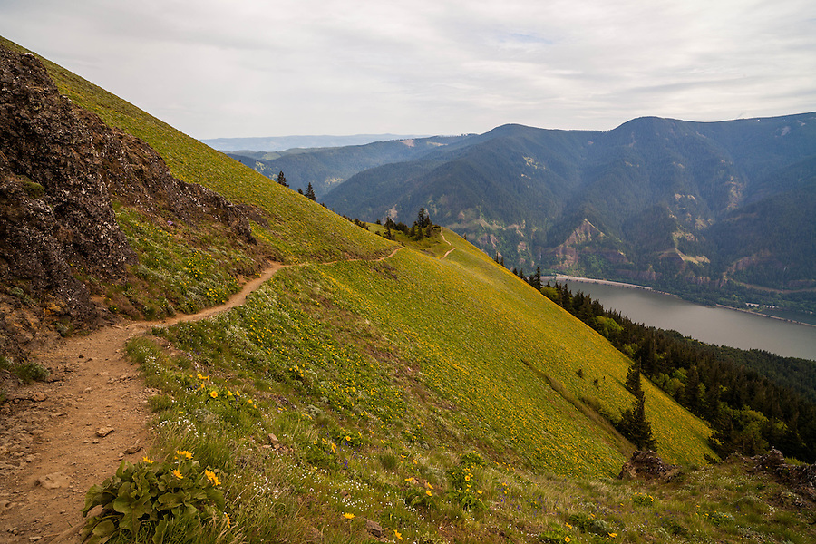 The Dog Mountain trail, devoid of hikers in Washington State.