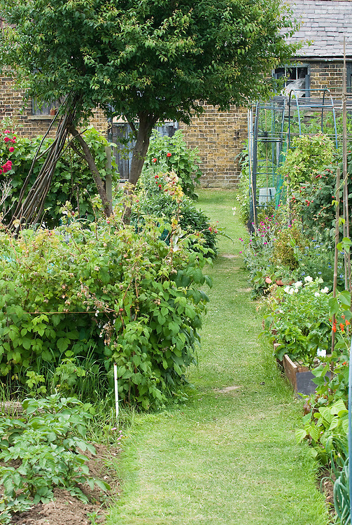 Allotment plots and grass path leading to stable and seed store buildings, late June.