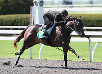 Hip #144 Speightstown - Five Star Holding colt consigned by Kirkwood Stables worked a Quarter mile in 20.2.  April 5, 2012.
