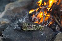 Räuchern am Lagerfeuer, Räucherbündel, Räucherbüschel, Räucherritual, Sommersonnenwende, Räuchern mit Kräutern, Kräuter verräuchern, Wildkräuter, Duftkräuter, Duft, Feuer, Outdoor, Feuerstelle, Campen. fire, Smoking with herbs, wild herbs, aromatic herbs, fumigate, cure, bonfire, campfire, camping. Oregano, Wilder Dost, Echter Dost, Gemeiner Dost, Origanum vulgare, Oregano, Wild Marjoram. Tüpfel-Johanniskraut, Echtes Johanniskraut, Tüpfeljohanniskraut, Hypericum perforatum, St. John´s Wort. Gewöhnlicher Beifuß, Beifuss, Artemisia vulgaris, Mugwort, common wormwood. Rainfarn, junge Blätter im Frühjahr, Rain-Farn, Tanacetum vulgare, Chrysanthemum vulgare, Tansy. Walnussblätter, Walnuß, Walnuss, Walnuß, Wal-Nuss, Wal-Nuß, Juglans regia, Walnut, Noyer commun