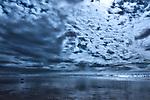 Dog walks on a beach under a dark cloudy sky, Agadir, Morocco.