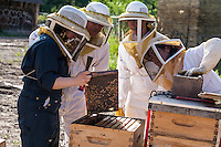 Members of the Toronto Beekeepers Co-op learn from an experienced beekeeper.