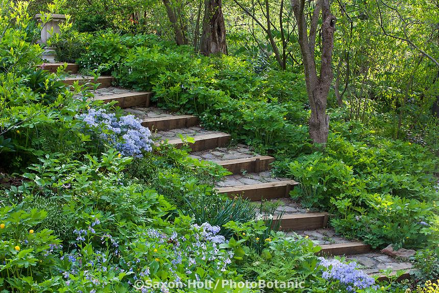 Steps leading through Spring Garden with ephemeral groundcovers, Boninti Garden, Virginia