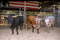 CITY OF INDUSTRY, CA - JULY 16: Bulls at the 32nd Annual Bill Pickett Invitational Rodeo Rides, Southern California at The Industry Hills Expo Center in the City of Industry on July 16, 2016 in the City of Industry, California. Credit: Koi Sojer/Snap'N U Photos/MediaPunch