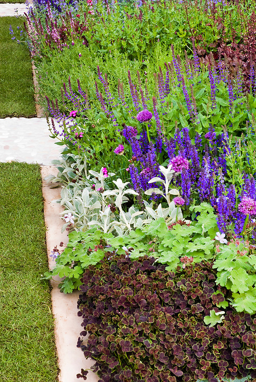 Trifolium, Stachys, Veronica, Allium in border edged with stone pavers for easy lawn mowing