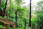 Tree Ferns, Katandra Reserve, NSW