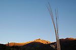 Saguaro skeleton and morning light on the Santa Catalina Mountains, Sabino Canyon Recreation Area, Coronado National Forest, Tucson, Arizona