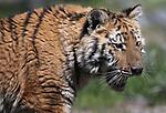 Animal Ark 050117