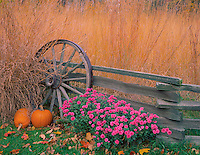 Bureau, County, IL<br /> Fall scene of native praire grasses, pumpkins, chrysantheums with weathered fence &amp; wagon wheel