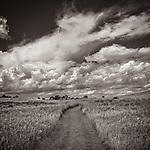 PRAIRIE PATH #blackandwhite #monochrome #wisconsin #midwestmemoir #photograph #landscape #wisconsinphotograph #field #prairie #midwest #clouds #B&W #black&white #path #trail