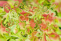 abstractions of tree leaves with many shades. Colors of the nature in summer, red and green.Abstract non objective photography.Fine art photography.Modern art.