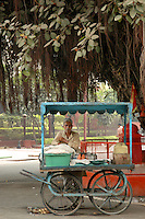 Food Vendor under Banyan Tree in Agra, India