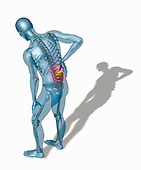Biomedical illustration of a man hunched over holding his lower back in pain