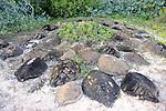 Turtle Shell Graveyard