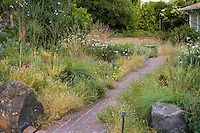 Path through California native plant front yard meadow garden with native grasses and perennials.