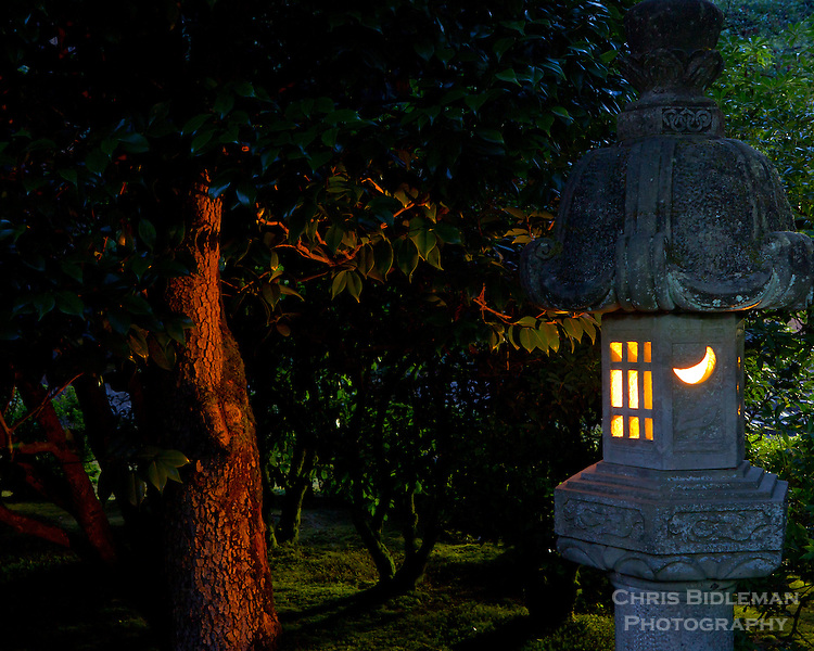A stone lantern is lit and glowing in early evening to highlight the bark of a camellia tree and moss on the ground in the Flat Garden (hira-niwa) of the Portland Japanese Garden