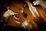 Trophies taken, mostly from Safari hunts, by Thermopolis Day's Inn owner Jim Mills.  Mills' hotel and the attached Safari Club, a restaurant and bar, feature mounts and photographs of animals as part of the decor.