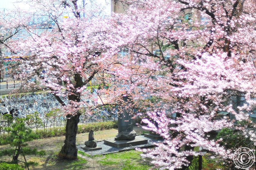 Hirosaki University Hirosaki University in The