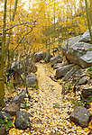 Trail to Alberta Falls from Bear Lake. Path is covered in leaves and lined by boulders. Rocky Mountain National Park near Estes Park Colorado. September 1998.
