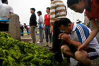 Tourists and pedestrians look at a pile of algae on the sidewalk near Qingdao Bay in Qingdao, Shandong, China.  ..Qingdao is the host of the sailing events for the 2008 Summer Olympics. Algae blooms like this have become common in inland lakes in China, often caused by high pollution in bodies of water.  The city is asking for help and forcing residents to take part in the cleanup effort before the Olympic events..