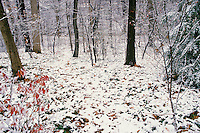 Winter Path through deciduous forest from yard in winter - series