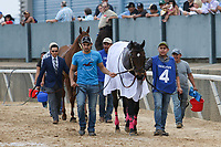 HOT SPRINGS, AR - April 14: Divine Elegance #4 walks to the paddock prior to the Apple Blossom Handicap at Oaklawn Park on April 14, 2017 in Hot Springs, AR. (Photo by Ciara Bowen/Eclipse Sportswire/Getty Images)