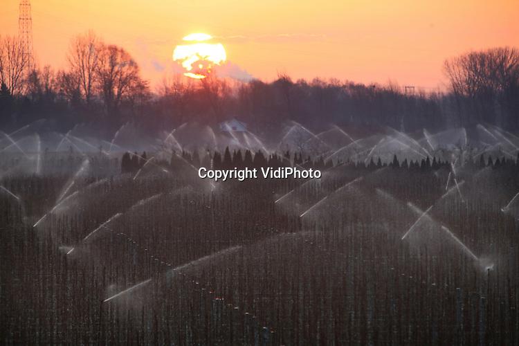 Foto: VidiPhoto<br /> <br /> KESTEREN/DRIEL - Fruittelers in de Betuwe moesten woensdagmorgen hun fruitbomen beregenen om te voorkomen dat de uitlopende knoppen en bloesem bevriest. In de vroege ochtend en bij opkomende zon levert dat mooi beeld op. Het is met name nachtvorst in het voorjaar die voor veel schade kan zorgen in de fruitteelt. Beregenen is een van de oplossing. Het water bevriest dan en vormt zo een beschermlaag rond de knoppen en bloesem.