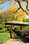 Pagoda and giant Maple, Kykuit, Rockefeller Estate, Pocantico Hills, New York.