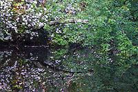 Trees, Hamilton Reservoir, Holland, Massachusetts, US