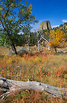 Fall color under Devils Tower, Devils Tower National Monument, Wyoming USA