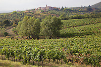 Italy. Tuscany. Villa A Sesta is part of the village Castelnuovo. Vineyard belonging to the Agricola Tattoni Villa A Sesta. A vineyard is a plantation of grape-bearing vines, grown mainly for winemaking, but also raisins, table grapes and non-alcoholic grape juice. 18.09.10 © 2010 Didier Ruef
