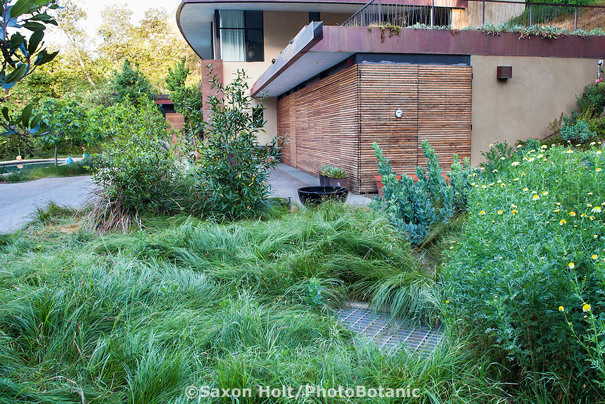Carex, Sedge lawn substitute, , Coyote House, SITES® residential home with sustainable garden Santa Barbara California, Susan Van Atta landscape architect, Ken Radtkey architect.