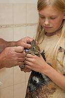 Wildkaninchen, Wild-Kaninchen, Kaninchen, verwaistes Jungtier wird in menschlicher Obhut großgezogen, Impfung beim Tierarzt, Tierkind, Tierbaby, Tierbabies, Oryctolagus cuniculus, Old World rabbit