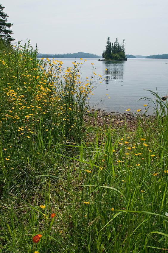 Wildflowers and Lake Superior shoreline at Isle Royale National Park.