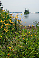 Wildflowers and Lake Superior shoreline at Isle Royale National Park.