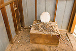 Interior of an outhouse with pack rat next in the vault at the old gold mine named Ruth, Homewood Canyon, Trona, Calif...
