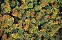 Deutschland, Wald, Laubwald, Herbstlaub, Sachsenwald