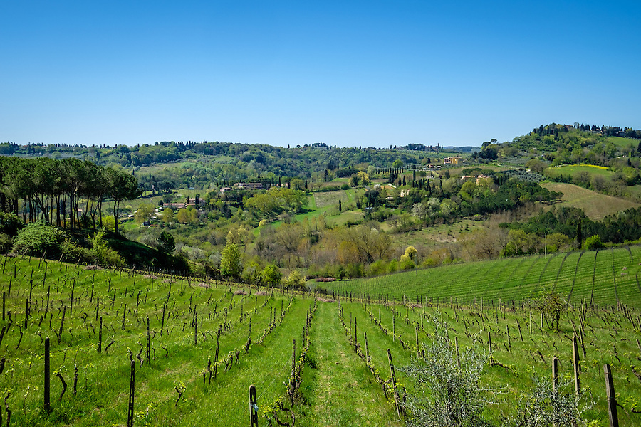 SAN GIMIGNANO, ITALY - CIRCA MAY 2015:  Vineyards over the hills near San Gimignano in Tuscany